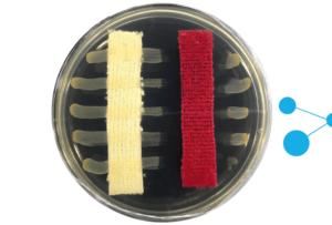 Bakterietest
